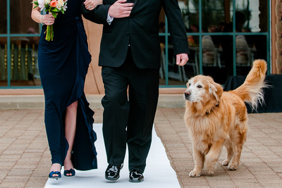 Pet dog is the ring bearer at this wedding