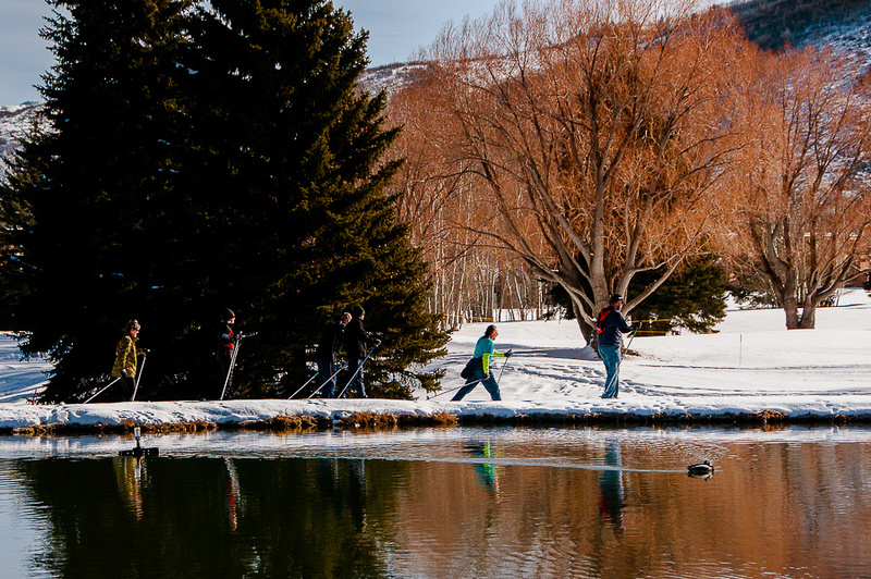 XC skiing with reflections and a duck